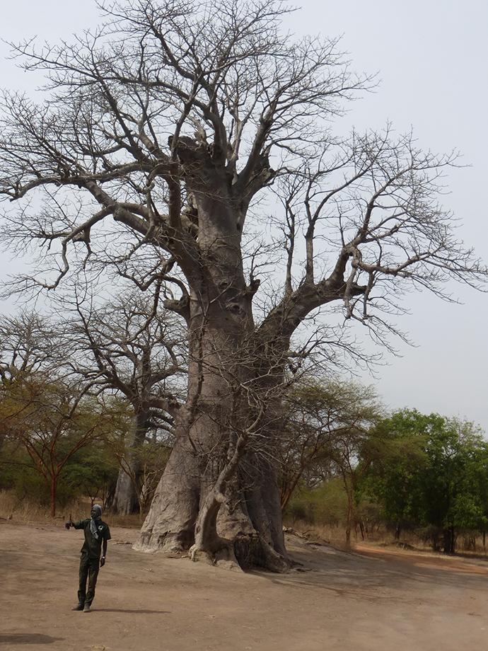 viaggio in Senegal