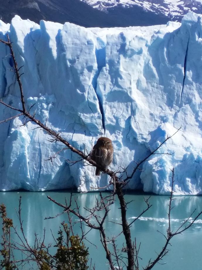 Perito Moreno animali
